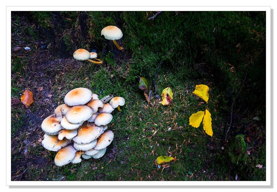 Fungi at Golitha Wood